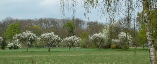 Garten- Landschaftsbau