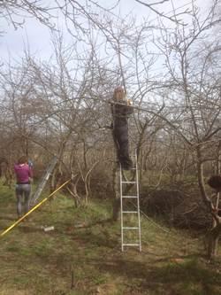 Obstbaumschnitt-Kurs