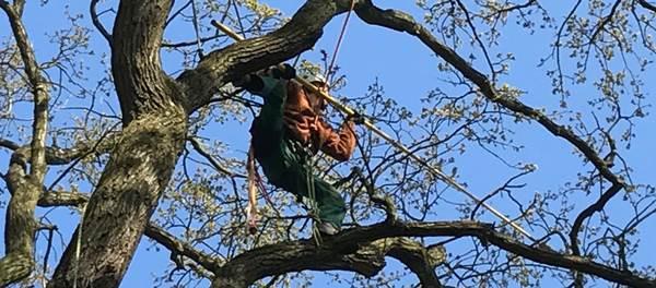 Baumarbeiten mit der Seilklettertechnik